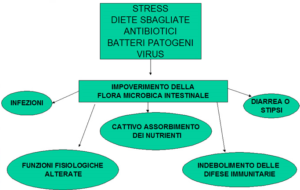 disbiosi intestinale 1